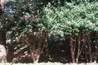 熊本県営運動公園の木々の紅葉の季節肥後山茶花の花