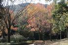 県営運動公園の木々の紅葉