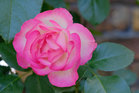 美しさに気づくことは癒し、免疫ー健康=気...